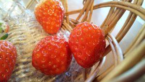 松本のイチゴが艶やか
