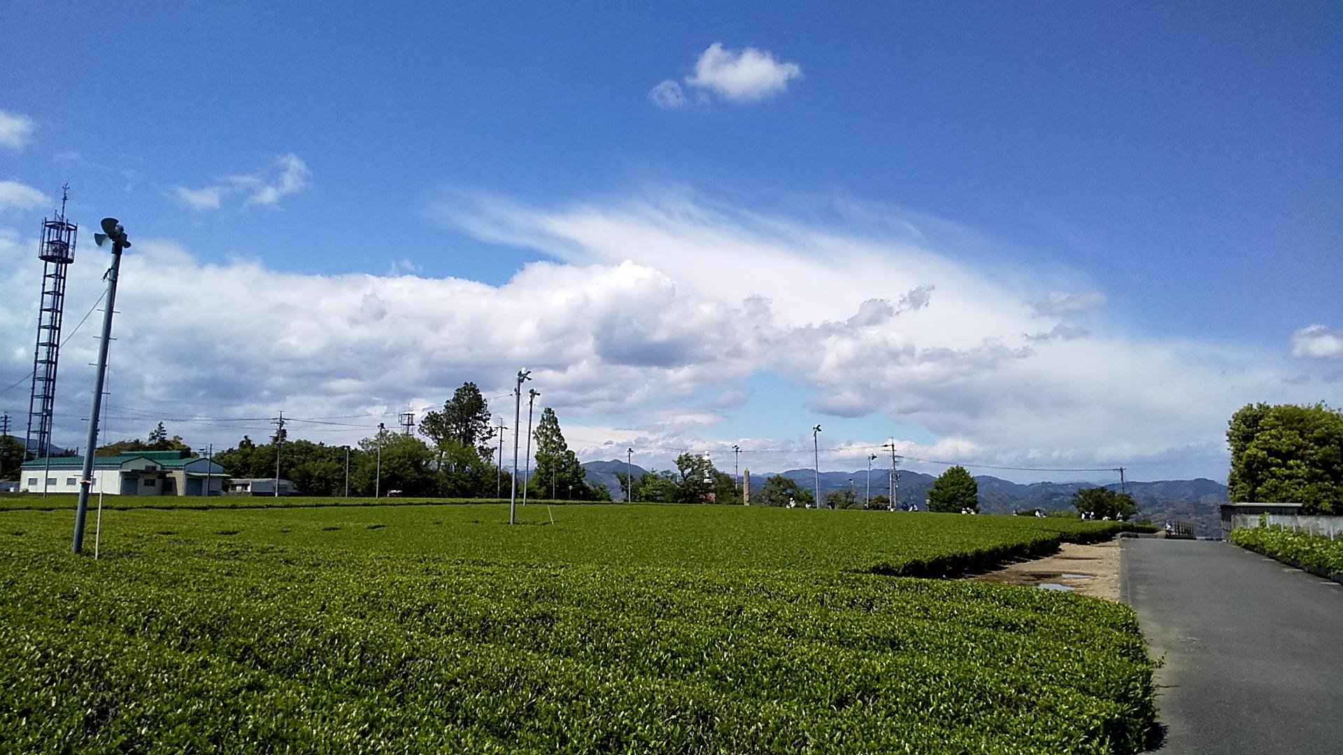 広大な茶畑